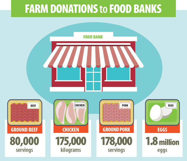 This image shows the amounts of farm donations to food banks. Since 2014, the Beef Farmers of Ontario has provided 80,000 servings of fresh ground beef. The Chicken Farmers of Ontario delivers about 175,000 kilograms of chicken to food banks a year. In 2016 Ontario Pork and its sector partners donated more than 178,000 servings of pork, this is nearly 27,000 kilograms of ground pork. The Egg Farmers of Ontario contributes about 1.8 million eggs.