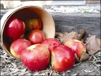 picture of honeycrisp apple