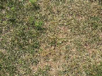 Image of a portion of lawn that is thin and patchy.