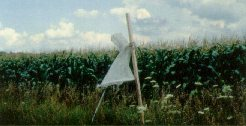 A Heliothis trap, baited with a pheromone lure, is a simple way to monitor for corn earworms