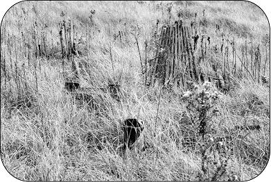 Unused oil or gas well and remnants.
