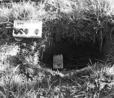 TDR instrument about to be buried in 15-cm hole wired to above ground data logger (in apple orchard).
