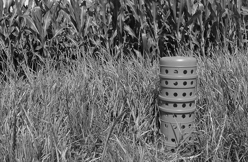Picture of a catch basin (also called a higgenbottom) in a field next to a corn crop.  The catchbasin sticks out about 1 m out of the ground.