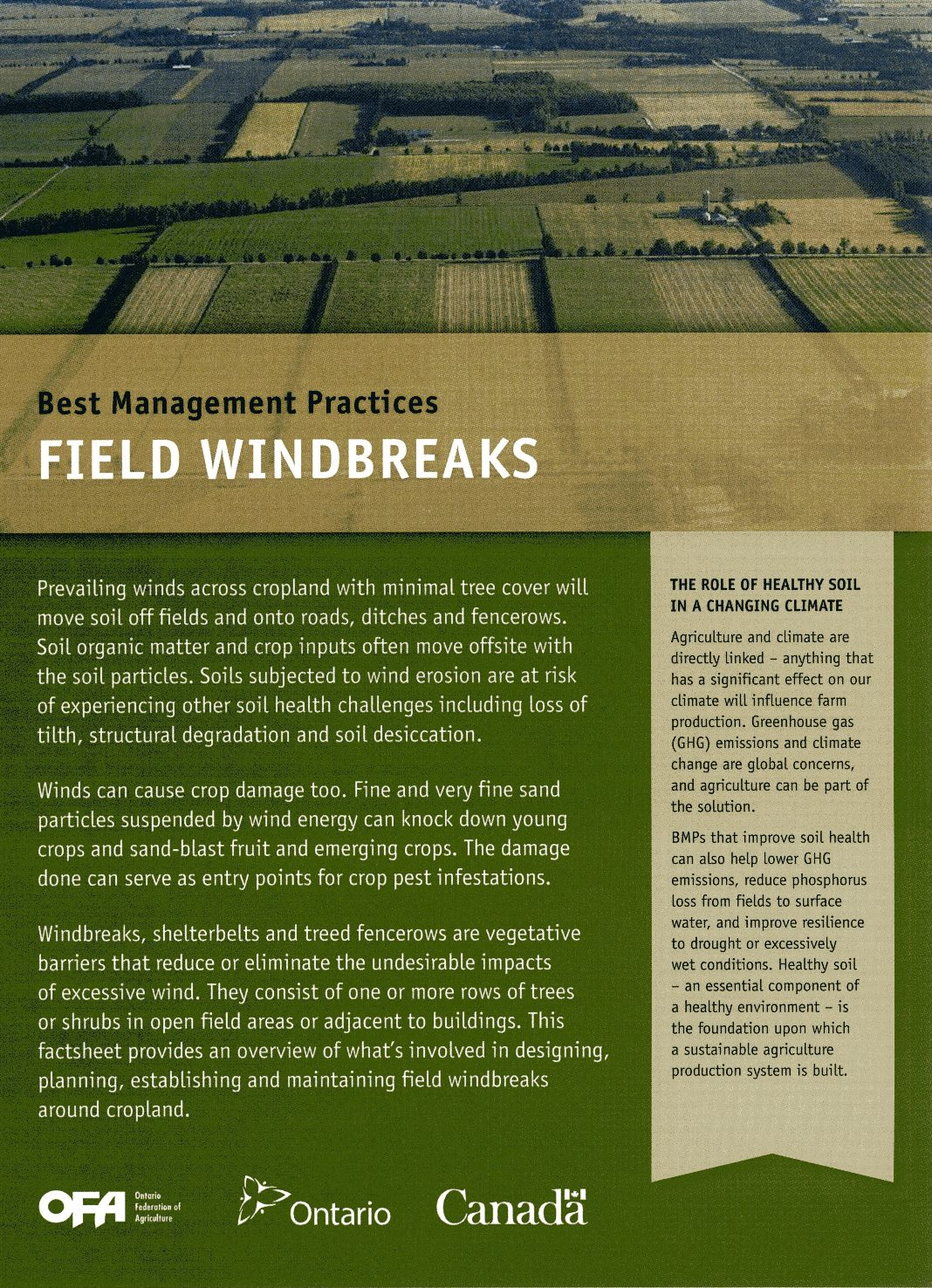 Field Windbreaks