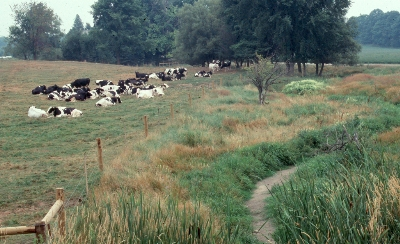 A herd of dairy cattle rests comfortably in a field that has been fenced off from the adjacent watercourse.