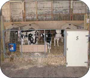 Photo 1 . The warm box (#5) keeps milk at about 20°C and prevents nipples from freezing in this cold (below freezing) calf housing.