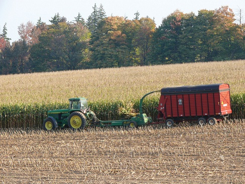 Harvest the whole plant for corn silage at 45%-35% dry matter or 55%-65% moisture.