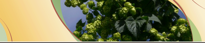 Banner with hops photo